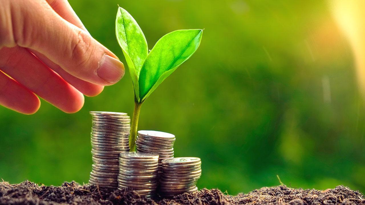 money_tree_earth